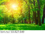 Купить «Летний парк солнечным днем. Летний пейзаж. Summer sunny park landscape. Summer city park with deciduous green trees», фото № 33827649, снято 6 июня 2019 г. (c) Зезелина Марина / Фотобанк Лори