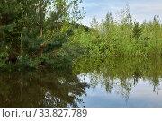 Купить «Forest flooded when the river overflowed», фото № 33827789, снято 15 мая 2020 г. (c) Евгений Харитонов / Фотобанк Лори