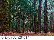Купить «Dark forest», фото № 33828017, снято 11 декабря 2017 г. (c) Роман Сигаев / Фотобанк Лори