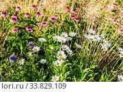Купить «Nature organic background from decorative flowers», фото № 33829109, снято 8 июля 2019 г. (c) FotograFF / Фотобанк Лори