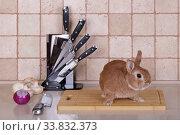 Купить «Живой кролик сидит на разделочной доске», фото № 33832373, снято 19 мая 2020 г. (c) Игорь Долгов / Фотобанк Лори