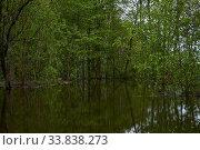 Shady grove flooded during the spring flood. Стоковое фото, фотограф Евгений Харитонов / Фотобанк Лори
