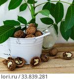 Купить «Walnuts and leaves», фото № 33839281, снято 11 мая 2020 г. (c) Елена Блохина / Фотобанк Лори