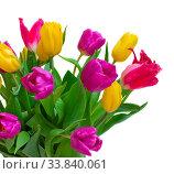 Купить «Bouquet of fresh tulips isolated on white background», фото № 33840061, снято 5 июля 2020 г. (c) age Fotostock / Фотобанк Лори