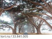 Купить «Green trees tunnel. Natural background.», фото № 33841005, снято 31 мая 2020 г. (c) easy Fotostock / Фотобанк Лори