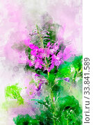 Купить «Herb willow-herb (Chamerion angustifolium). Stylization in watercolor drawing.», фото № 33841589, снято 5 июня 2020 г. (c) easy Fotostock / Фотобанк Лори