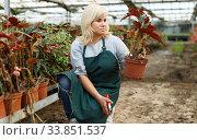 Female florist in apron with scissors cutting plants of begonia in hothouse. Стоковое фото, фотограф Яков Филимонов / Фотобанк Лори