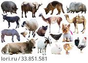 collection farm animals. Стоковое фото, фотограф Яков Филимонов / Фотобанк Лори