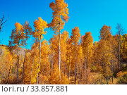 Купить «Autumn scene in yellow tones. Fall background.», фото № 33857881, снято 2 июня 2020 г. (c) easy Fotostock / Фотобанк Лори