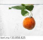 Купить «Apricot in water with bubbles», фото № 33858825, снято 12 июля 2016 г. (c) Tetiana Chugunova / Фотобанк Лори