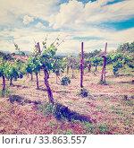 Купить «Young Vineyard in the Italian Apennines, Instagram Effect», фото № 33863557, снято 29 мая 2020 г. (c) easy Fotostock / Фотобанк Лори