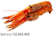 Raw Norway lobster on white background. Стоковое фото, фотограф Яков Филимонов / Фотобанк Лори
