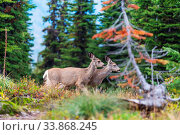 Deer in green meadow, USA. Стоковое фото, фотограф Zoonar.com/Galyna Andrushko / easy Fotostock / Фотобанк Лори