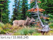 Deer in green meadow, USA. Стоковое фото, фотограф Zoonar.com/Galyna Andrushko / easy Fotostock / Фотобанк Лори