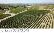 Купить «Aerial view of vineyard plantations in Spain», видеоролик № 33873545, снято 23 июля 2018 г. (c) Яков Филимонов / Фотобанк Лори