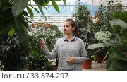 Купить «Female owner of garden center standing in nursery shop with potted plants», видеоролик № 33874297, снято 8 ноября 2019 г. (c) Яков Филимонов / Фотобанк Лори