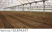 Купить «Inside modern industrial greenhouse with young vegetable seedlings growing in fertile soil», видеоролик № 33874617, снято 27 апреля 2020 г. (c) Яков Филимонов / Фотобанк Лори