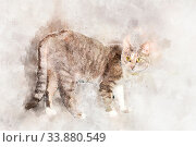 Купить «A graceful gray tabby cat with yellow eyes stands and looks at the camera.Stylization in watercolor drawing», фото № 33880549, снято 5 июня 2020 г. (c) easy Fotostock / Фотобанк Лори