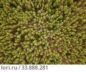 Купить «Aerial top view above forest area.», фото № 33888281, снято 16 мая 2020 г. (c) Ярослав Данильченко / Фотобанк Лори