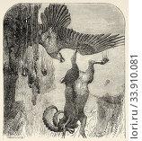 Buteoninae. Black Mongolian eagle killing a mouflon, Mongolia. Central Asia. Old 19th century engraved illustration, Le Tour du Monde 1863. Стоковое фото, фотограф Jerónimo Alba / age Fotostock / Фотобанк Лори