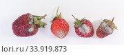 Испорченные, покрытые плесенью ягоды клубники на белом фоне. Стоковое фото, фотограф Наталья Гармашева / Фотобанк Лори