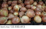Купить «Closeup of fresh ripe onion on market counter, onion background», видеоролик № 33930413, снято 20 ноября 2019 г. (c) Яков Филимонов / Фотобанк Лори