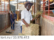 Купить «Two workers spreading hay at stable», фото № 33976413, снято 2 октября 2018 г. (c) Яков Филимонов / Фотобанк Лори