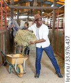 Man and woman feeding horses with hay. Стоковое фото, фотограф Яков Филимонов / Фотобанк Лори