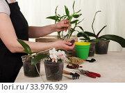Купить «A woman in an apron near a table with garden supplies, replants orchids», фото № 33976929, снято 14 мая 2020 г. (c) Сергей Молодиков / Фотобанк Лори