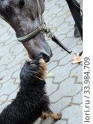 Купить «Neuenhagen, horse and dog sniff each other», фото № 33984709, снято 26 октября 2019 г. (c) Caro Photoagency / Фотобанк Лори