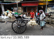 Calcutta, India, A man loads live chickens onto a hand-pulled rickshaw (2011 год). Редакционное фото, агентство Caro Photoagency / Фотобанк Лори