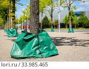 Купить «Water bags irrigate trees in urban areas during drought, Essen, Ruhr area, North Rhine-Westphalia, Germany», фото № 33985465, снято 5 мая 2020 г. (c) Caro Photoagency / Фотобанк Лори