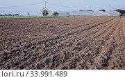 Купить «Image of plowed field with garden-beds in countryside», видеоролик № 33991489, снято 5 августа 2020 г. (c) Яков Филимонов / Фотобанк Лори