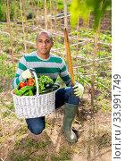 Hispanic gardener proud of harvest of vegetables. Стоковое фото, фотограф Яков Филимонов / Фотобанк Лори