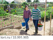 Купить «Positive family couple with harvest of vegetables in garden», фото № 33991905, снято 25 мая 2020 г. (c) Яков Филимонов / Фотобанк Лори