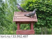 Голуби на кормушке в парке. Стоковое фото, фотограф Илюхина Наталья / Фотобанк Лори