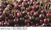 Купить «Close-up of a wet red ripe juicy cherries. Drops of water on berries. Cherries background. Tracking slow motion video in 4K. Soft focus.», видеоролик № 33992921, снято 27 июня 2018 г. (c) Ярослав Данильченко / Фотобанк Лори