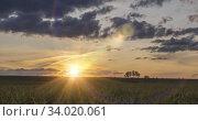 Купить «Flat hill meadow timelapse at the summer sunrise time. Wild nature and rural field. Sun rays, trees, green grass movement. Motorised dolly slider», видеоролик № 34020061, снято 1 апреля 2020 г. (c) Александр Маркин / Фотобанк Лори