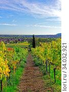 Weinstöcke, Herbstlaub, Ortsansicht. Стоковое фото, фотограф Bernd J. W. Fiedler / age Fotostock / Фотобанк Лори