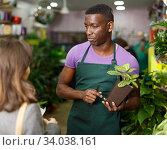 Florist consulting female client about potted houseplant. Стоковое фото, фотограф Яков Филимонов / Фотобанк Лори