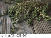 thyme - aromatic plant of the mint family are used as a culinary herb. Стоковое фото, фотограф Nataliia Zhekova / Фотобанк Лори