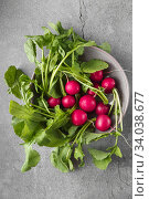 Купить «Freshly harvested, purple colorful radish on gray concrete background. Growing radish. Growing vegetables. Seasonal Cooking, food styling.», фото № 34038677, снято 11 апреля 2019 г. (c) Nataliia Zhekova / Фотобанк Лори