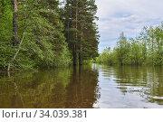 Купить «Forest glade flooded during the flood», фото № 34039381, снято 15 мая 2020 г. (c) Евгений Харитонов / Фотобанк Лори