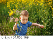 Купить «Cute little boy running with a bouquet of flowers on a yellow meadow», фото № 34055169, снято 4 мая 2015 г. (c) Nataliia Zhekova / Фотобанк Лори