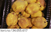 Купить «Fresh yellow quince in plastic box on market showcase. Organic vitamin fruits», видеоролик № 34055617, снято 3 августа 2020 г. (c) Яков Филимонов / Фотобанк Лори