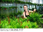 Portrait of young woman florist while gardening with fern. Стоковое фото, фотограф Яков Филимонов / Фотобанк Лори