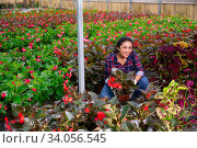 Купить «Female horticulturist working with flowers red orchids in pots», фото № 34056545, снято 7 июля 2020 г. (c) Яков Филимонов / Фотобанк Лори