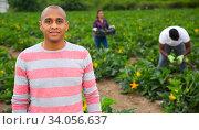 Portrait of latino hired worker on the field. Стоковое фото, фотограф Яков Филимонов / Фотобанк Лори