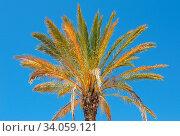 Portugal Algarve Palme. Стоковое фото, фотограф Zoonar.com/Rainer Pfander Fellbach / easy Fotostock / Фотобанк Лори