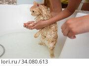 Кошка встала на задние лапы купаясь в ванной комнате. Стоковое фото, фотограф Иванов Алексей / Фотобанк Лори